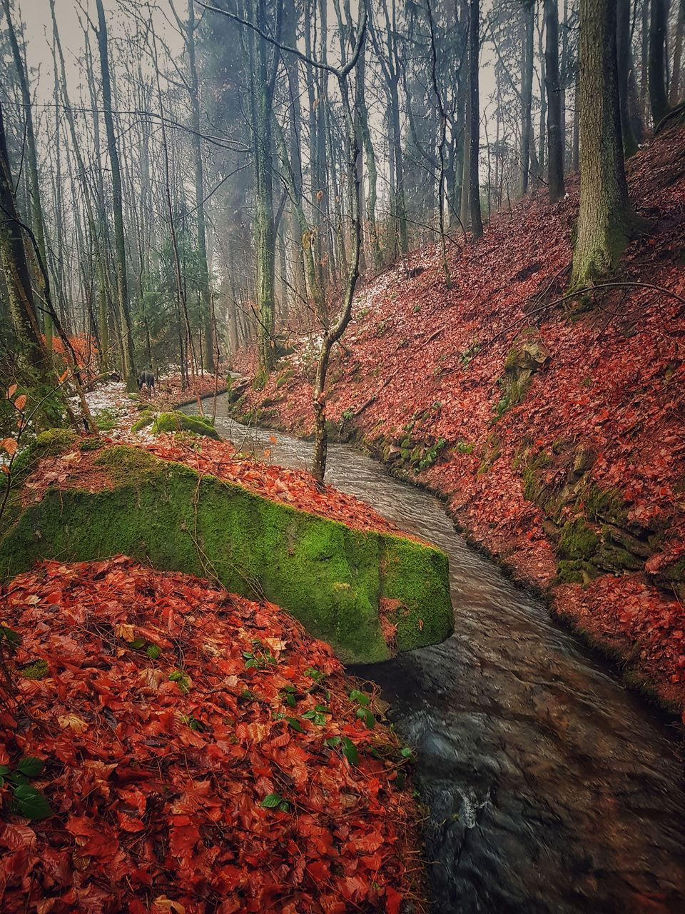 tree, plant, forest, beauty in nature, land, tranquility, change, nature, autumn, tranquil scene, scenics - nature, trunk, tree trunk, no people, non-urban scene, day, growth, woodland, the way forward, direction, outdoors, stream - flowing water, flowing water, fall, autumn collection