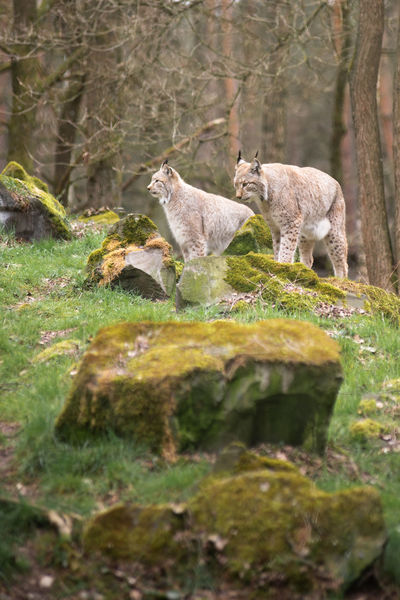 Luck Wildpark Alte Fasanerie Animal Animal Themes Animal Wildlife Animals In The Wild Day Field Forest Full Length Green Color Group Of Animals Hanau Land Mammal Nature No People Outdoors Plant Selective Focus Steinheim Tree Two Animals Vertebrate