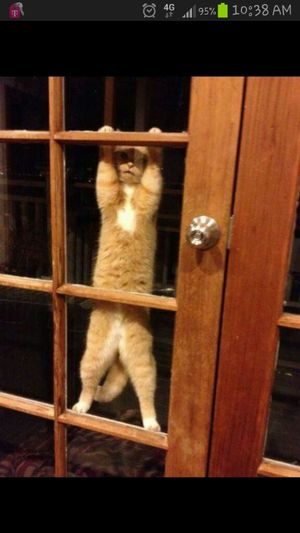 "hies like ""please let mie in...ill bie good""...lolz"