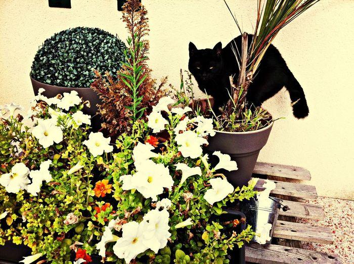 valla qui jardine merci la mini tondeuse
