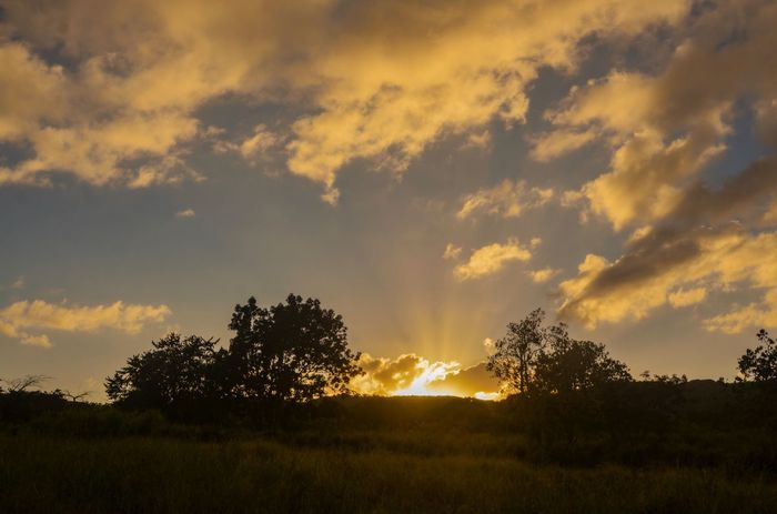 Bello atardecer Sunset Sky Beauty In Nature Tree Scenics Tranquility Landscape Sun Tranquil Scene No People