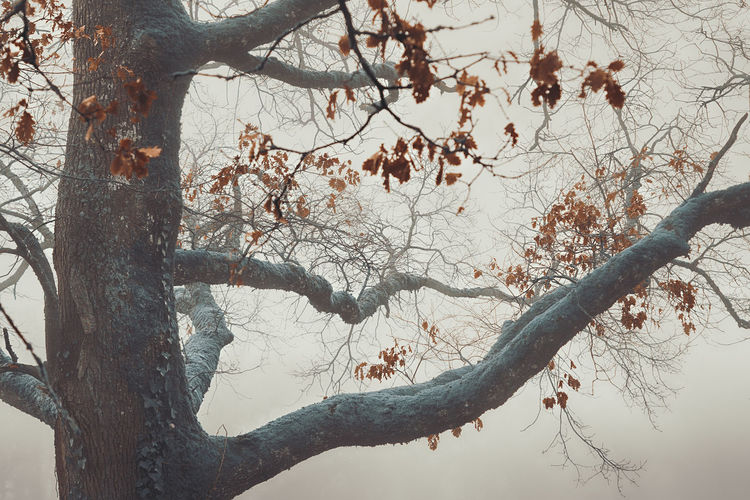 sorcery Tree Fog Foggy Branch Foliage Nature Trunk Forest Nature_collection Nature Nature Photography Taking Photos Taking Pictures Getting Inspired Getting Creative Eye4photography  Outdoors Shades of Winter EyeEm Best Shots EyeEm Nature Lover Branch Backgrounds Close-up