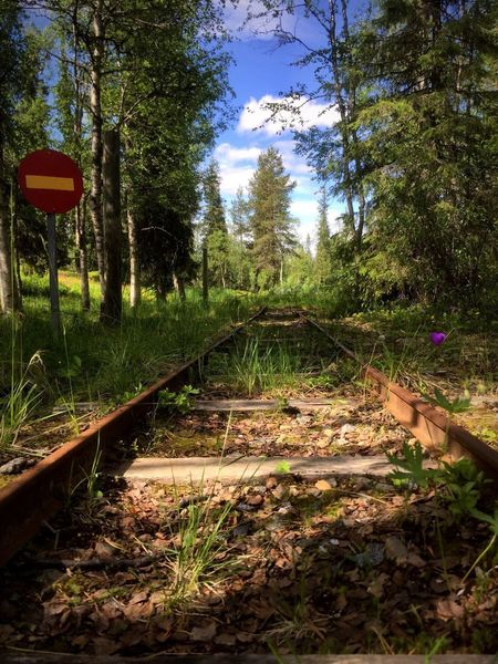 Saariselkä 🇫🇮 Finnland Finland Lappland Finnland In Summer Lappland, Finland Saariselkå Tree Railroad Track Rail Transportation Transportation Growth The Way Forward Day No People Nature Forest Outdoors Sky Beauty In Nature End Stop Sign Stop One Way One Way Sign One Way Road One Way Street