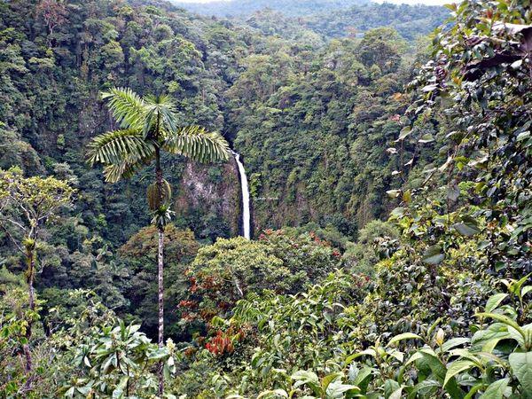 La catarata la Fortuna, un lugar precioso, y que cuesta mucho bajar hasta sus aguas. Travelling Travel Photography Viaje A Costa Rica Fotografia De Viaje