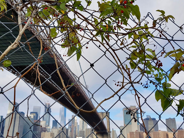 Outdoors Day Manhattan Fence Security Safety Chainlink Fence Protection Skyline Leaves Boundary No People Brooklyn Bridge / New York Building Exterior Growth Tree Autumn Metal Built Structure Bridge - Man Made Structure Low Angle View Barrier