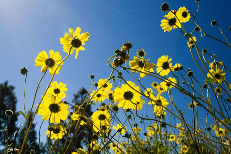 Flower Yellow Low Angle View Beauty In Nature Sky Nature Outdoors No People Wildflowers Flowers Spring Spring Flowers Springtime Sunny☀ Sunshine