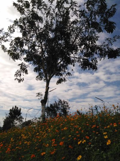 Travel Tree Nature Growth Sky Flower Beauty In Nature Cloud - Sky No People Outdoors Tranquility Sunset Day Branch Fragility Close-up Flower Head Freshness