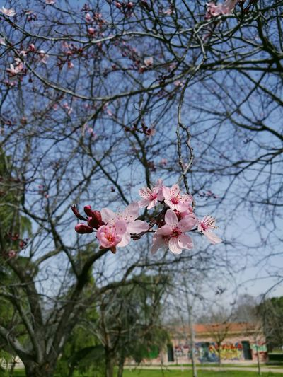 Flowers ParqueDeLasCruces Madrid Aluche Flores