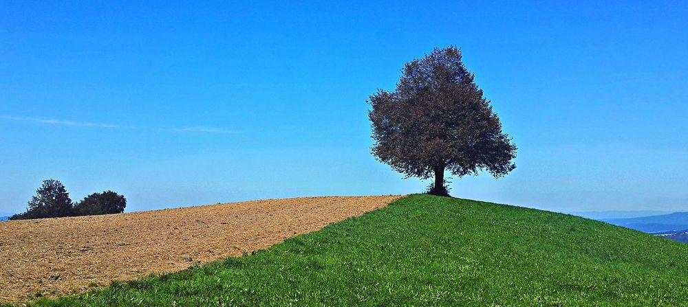 Lonely tree Adliswil Beauty In Nature Blue Felsenegg Field Grass Landscape Nature Outdoors Single Tree Sky Switzerland Tree Zürich
