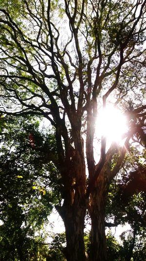 Vi algo Tree Beauty In Nature Sky Nature Growth Sunlight Sun Day Outdoors City VistaLinda SP