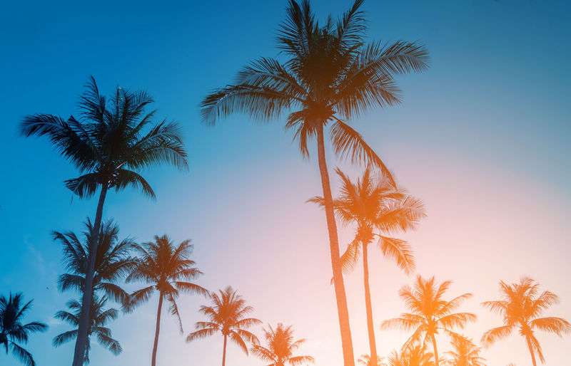 Beauty In Nature Bright Clear Sky Coconut Palm Tree Growth Low Angle View Nature No People Outdoors Palm Leaf Palm Tree Plant Scenics - Nature Silhouette Sky Sunset Tall - High Tranquil Scene Tranquility Tree Tree Trunk Tropical Climate Tropical Tree