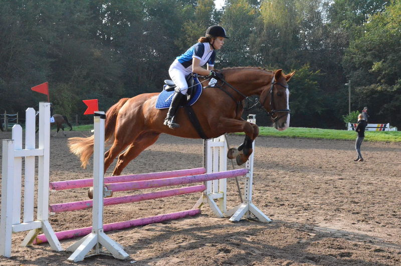 Picture from my Sister ♥ Horse Albion Showjumping