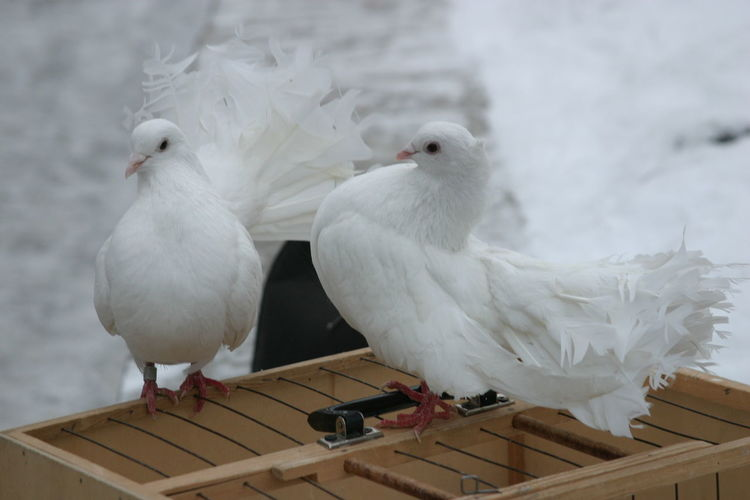 Close-up of seagull perching on roof