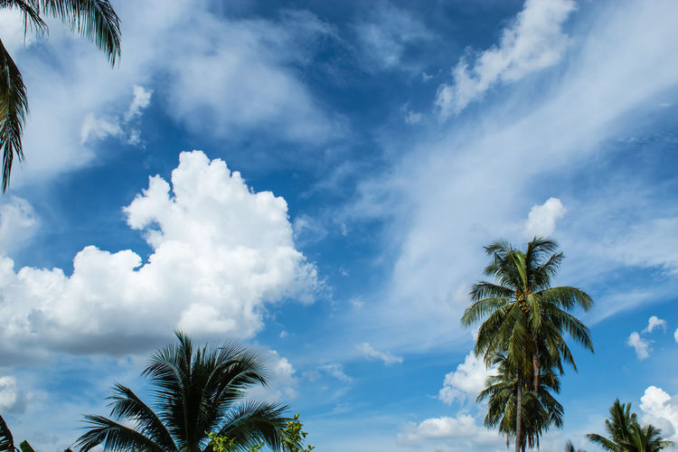 Beautiful clouds with Sun. Beauty In Nature Blue Cloud - Sky Coconut Palm Tree Day Growth Leaf Low Angle View Nature No People Outdoors Palm Leaf Palm Tree Plant Scenics - Nature Sky Tranquil Scene Tranquility Tree Treetop Tropical Climate Tropical Tree
