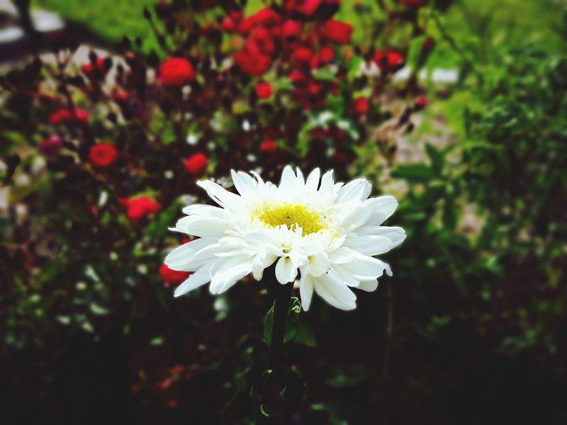#flowers#bokeh#blurredbackground#closeup#vibrantcolors Flower Fragility