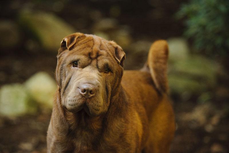 Portrait of dog on land