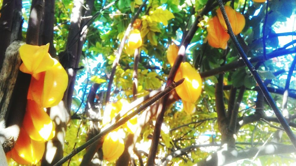 Colour Of Life Carambolas Fruits Nature Likeit