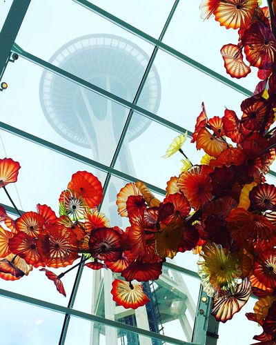 Seattle Chihuly museum Low Angle View Leaf Autumn Art Glass Blown Away Chihuly Garden And Glass Seattle Chandelier Space Needle Day Flower Change Growth Nature Hanging Plant Indoors  Architecture Beauty In Nature Fragility Sky Close-up Greenhouse Flower Head The Traveler - 2018 EyeEm Awards