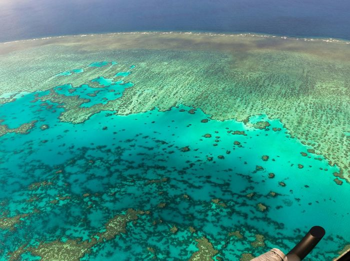Great Barrier Reef Ampimages