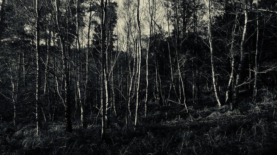 Full frame shot of tree against sky