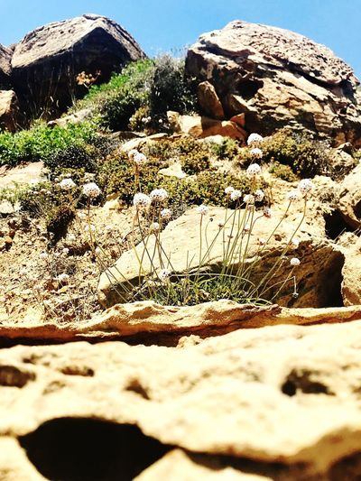 Life Sea Life SPAIN Plants On The Beach Life On Rocks Nature Land Day No People Beauty In Nature Beach Rock Sunny