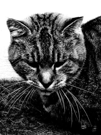 Pets Domestic Animals Domestic Cat Animal Themes One Animal Mammal Feline No People Close-up Cat Whisker Indoors  Portrait Day