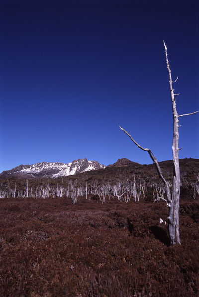 lines of waterlogged dead white trees, and snow capped peak Clear Sky Footpath Hike Landscape Long Distance Relationship Mountain Mountain Range Nature Outdoors Overland Track Scenics Tasmania Tassie The Overland Track Tranquil Scene Walk Walkway