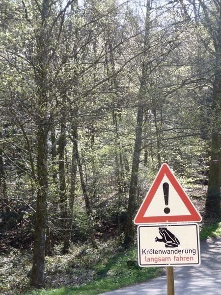 Translation frog crossing drive slowly Beauty In Nature In The Black Forest Germany