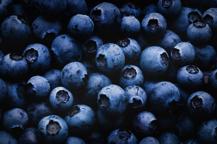 Blueberry dark background with shadows and light