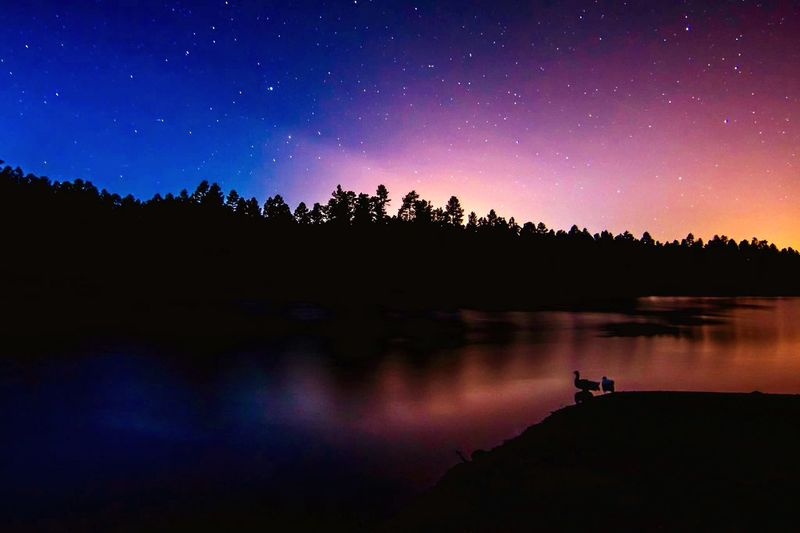 Scenic view of river by silhouette tree against star field