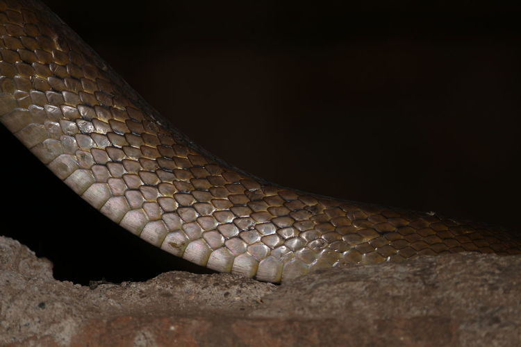 Snake Night No People Textured  Reptile Animal Scale Close-up Animal Themes Outdoors DSLR Photography Taking Photos Snake EyeEm Eyeem India Snakes Are Beautiful Snake Skin Snake Photography Reptile One Animal Shapes And Patterns