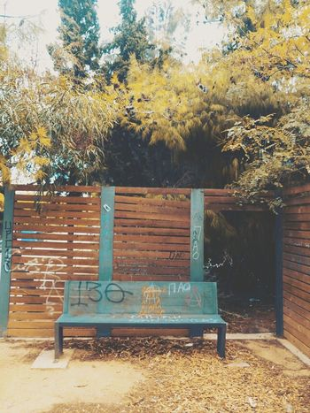 Bench Tree Park Bench Absence Seat Outdoors No People Day Nature Autumn Built Structure Getting Inspired Sony Mobile Sony Xperia XperiaM5 EyeEm Masterclass Our Best Pics EyeEm Best Shots Mobile Photography From My Point Of View Urban Reflections Orange Green Yellow Wood - Material