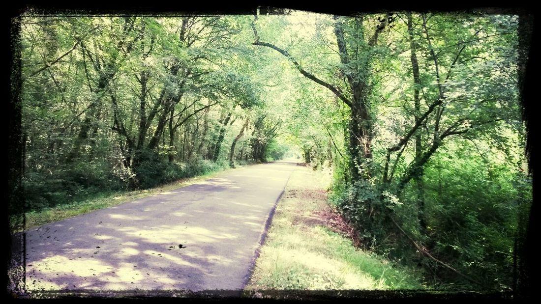 Petite route qui a ma préférence. Campagne Saint Selve Route vert Tunnel