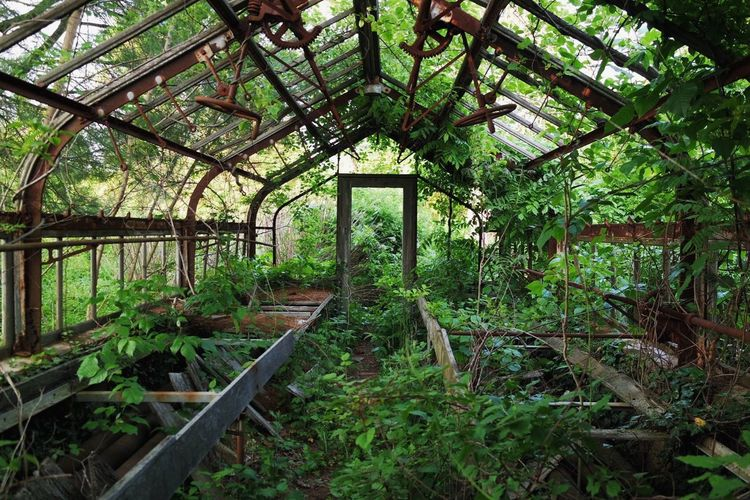 Abandon_seekers Abandoned Abandoned & Derelict Abandoned Buildings Abandoned Greenhouse Abandoned Places Abandoned_junkies Abandonedbuilding Abandonment_issues Architecture Built Structure Day Green Color Greenhouse Growth Indoors  Nature No People Plant Reclaimed By Nature Summer Tree