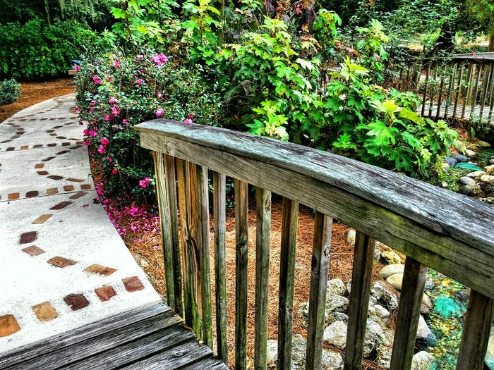 Brickpathways Day Fence Flowering Bushes Footpath Forest Grass Green Color Growth Park Plant Railing Small Babbling Brook Small Wooden Bridge Stonewalk Tree Tree Trunk U Wood Wood - Material Wooden