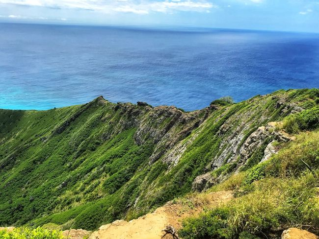On the edge Ocean Outdoors Photography Photo Oahu Hawaii Water Beauty In Nature Scenics - Nature Sea Land Tranquil Scene Beach Tranquility Nature No People Green Color Day Sky High Angle View Horizon Over Water Plant Outdoors Horizon Idyllic