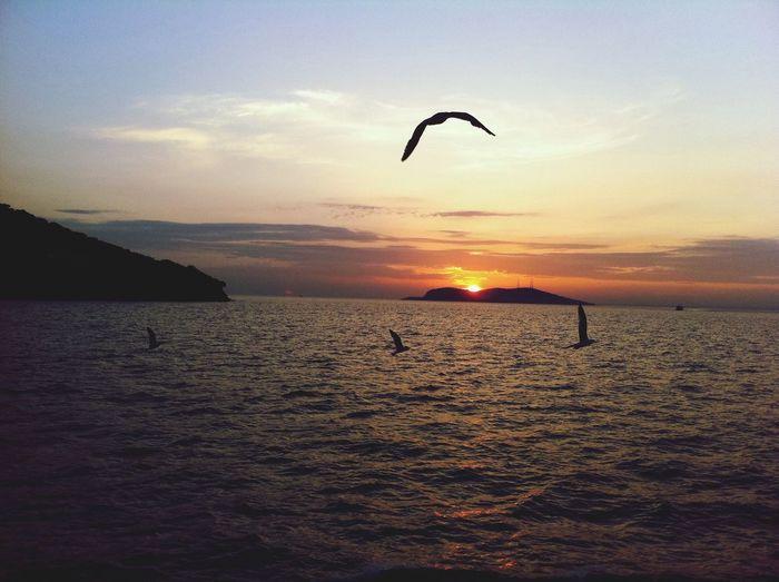Sunsett Sun Turkey Birds