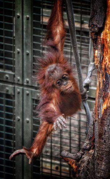 Chester Zoo Monkey Rope Swing EyeEm Animal Lover Taking Photos Photography Animals Zoo The Week On EyeEm