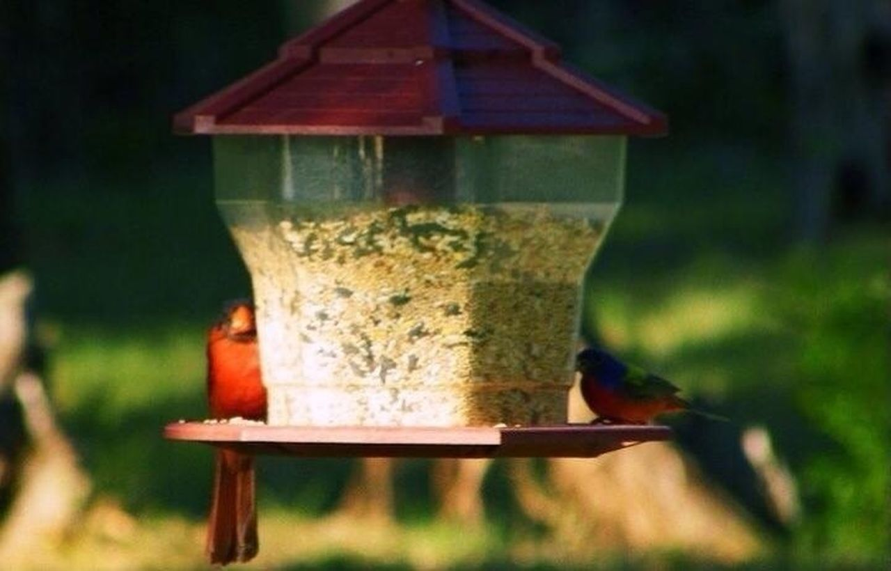 animals in the wild, animal themes, animal wildlife, one animal, bird feeder, no people, beehive, day, outdoors, apiculture, focus on foreground, bird, food, bee, nature, tree, close-up