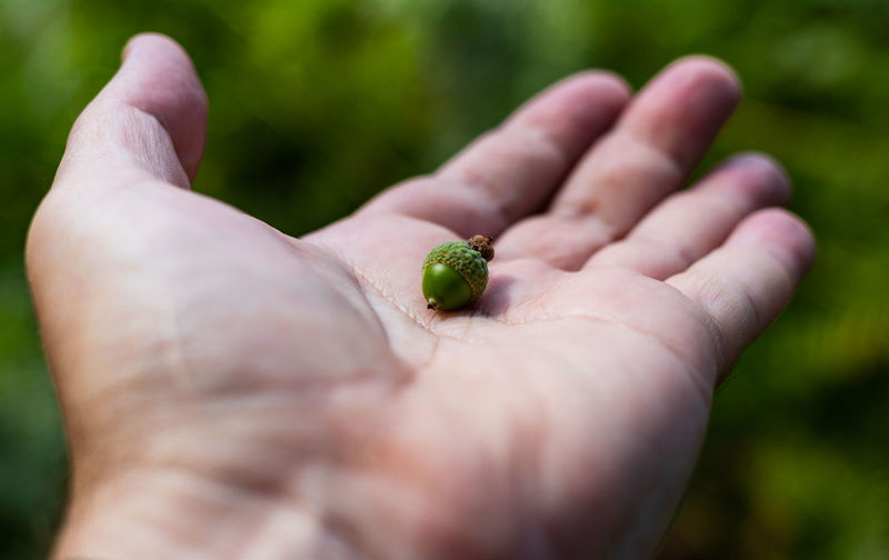 Acorn Nature WoodLand Body Part Finger Hand Holding Human Body Part Human Finger Human Hand Human Limb One Person Selective Focus