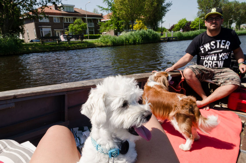 Amsterdam Canal on boat with dogs, Amstel River Amsterdam Amsterdam Canal Amsterdam City Cavalier King Charles Spaniel Dogs Abcoude Amsterdamcity Amsterdamse Grachten Boat Boats Canine Day Dog Domestic Domestic Animals Mammal Oude Kerk Outdoors Pets Water Westie White Dog