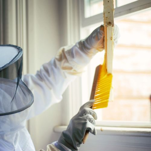 Beekeeper Close-up Day Hanging Honey Hygiene Indoors  No People Protective Glove Window Working Fresh On Market 2016