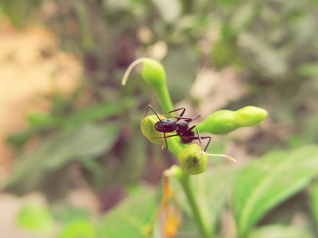 Say hello to my liitle friend. Ant Insect Insects  Insect Photo Insect Photography Smile Nature Insects At My Garden Littlemonster Cute Insects Cute Ant