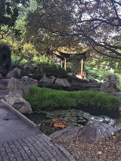 Chinesegardens Darling Harbour Garden Nature Water Garden Of Frienship Chinesegarden