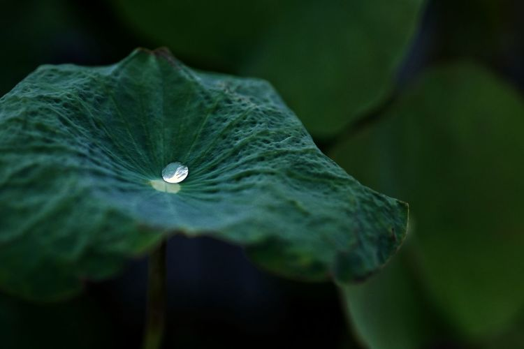 Water Leaf Flower Drop Close-up Plant Green Color Dew Butterfly - Insect Blade Of Grass