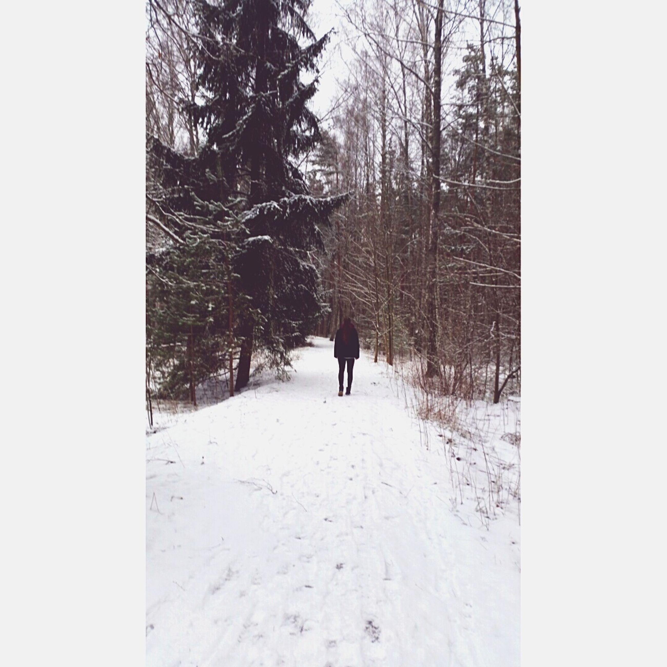 winter, snow, cold temperature, walking, season, the way forward, tree, weather, rear view, full length, bare tree, lifestyles, men, covering, unrecognizable person, nature, auto post production filter, leisure activity