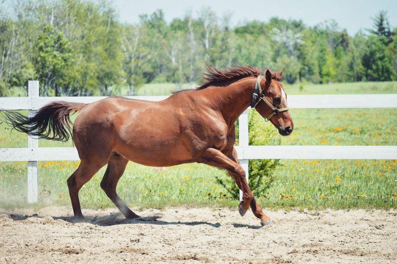 Horse running in paddock