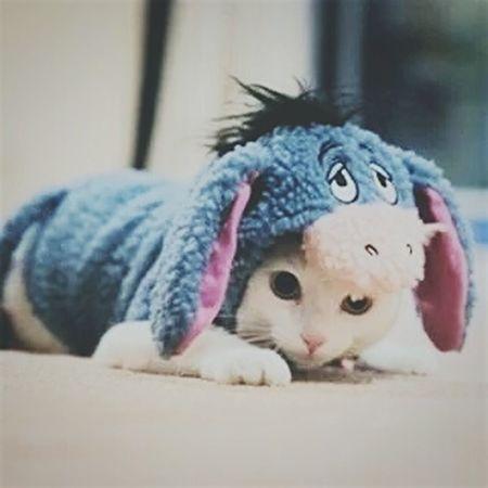 Tierno Disfraz Gato Cat Higor