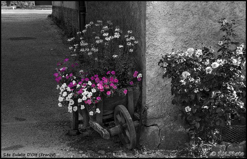 Streetphotography Blackandwhite France Black And White Color Splash Streetphoto_bw