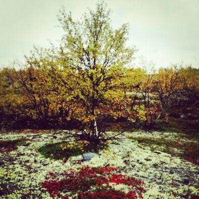 Autumn🍁🍁🍁 EyeEm Gallery EyeEm Best Shots - Nature Nature EyeEm Best Shots Autumn Interesting Love ♥ Beautiful Tree